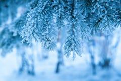 Schöne schneebedeckte Niederlassungen von gezierten Bäumen im Winter parken Stockfotos