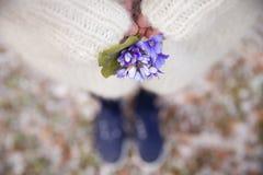 Schöne Schneeglöckchen in den Händen einer jungen Frau in der weißen Wolljacke und im Blau blühen Kleid Erste Frühlingsblumen in  Stockfotografie