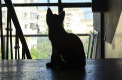Schöne schwarze Katze Lizenzfreies Stockbild