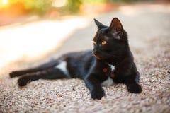 Schöne schwarze Katze, die auf der Straße liegt lizenzfreies stockbild