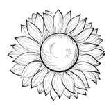 Schöne Schwarzweiss-Sonnenblume lokalisiert auf weißem Hintergrund Stockbild