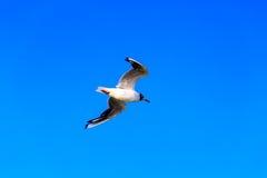 Schöne Seemöwe auf einem blauen Himmel des Hintergrundes Lizenzfreie Stockfotografie