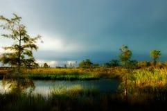 Schöne Seitenbeleuchtung über einem Teich in großer Zypresse-Konserve, Flo lizenzfreie stockfotos