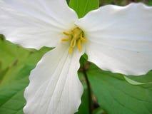 Schöne seltene Blume Stockfotos
