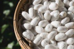 Schöne Silk Kokon-Weißnahaufnahme Lizenzfreies Stockbild