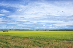Schöne Sommer-Landschaft mit grünem Gras und blauem Himmel Lizenzfreie Stockfotos
