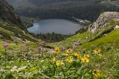 Schöne Sommeransicht von Popradske Pleso Hohe Tatra Berge Lizenzfreies Stockfoto