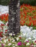 Schöne Sommerblumen Lizenzfreie Stockfotografie