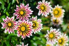 Schöne Sommerblumen Stockbild