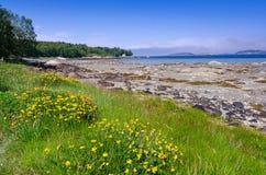Schöne Sommerfauna auf norwegisches Seeküste Stockbilder