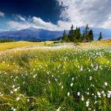 Schöne Sommerlandschaft lizenzfreies stockfoto
