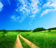 Schöne Sommerlandschaft Stockbilder