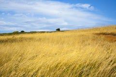 Schöne Sommerlandschaft Stockfotografie
