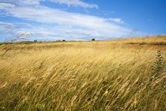 Schöne Sommerlandschaft Stockfoto