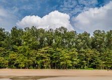 Schöne Sommerlandschaft mit Bäumen des blauen Himmels und des Kiefernholzes auf t stockbilder