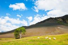 Schöne Sommerlandschaft mit Berg, Baum und Schafen Lizenzfreies Stockbild