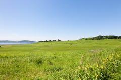 Schöne Sommerlandschaft von Wiesen mit Bäumen Lizenzfreie Stockfotografie