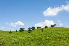 Schöne Sommerlandschaft von Wiesen mit Bäumen Abgetrennte Bäume auf einem grünen Hügel gegen den blauen Himmel Lizenzfreie Stockfotos