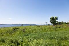 Schöne Sommerlandschaft von Wiesen mit Bäumen Abgetrennte Bäume auf einem grünen Hügel gegen den blauen Himmel Stockbild