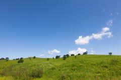 Schöne Sommerlandschaft von Wiesen mit Bäumen Abgetrennte Bäume auf einem grünen Hügel gegen den blauen Himmel Lizenzfreies Stockfoto