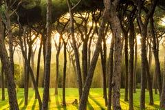 Schöne Sonne strahlt morgens Wald aus Stockfoto