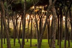 Schöne Sonne strahlt morgens Wald aus stockfotos