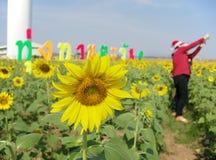 Schöne Sonnenblume mit den Leuten, die selfies aufwerfen Stockbilder