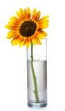 Schöne Sonnenblumen im Vase Stockbild