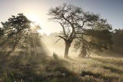 Schöne Sonnenstrahlen bei nebelhaftem Sonnenaufgang hinter Baum stockbilder