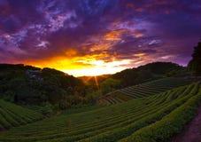 Schöne Sonnenuntergangszenen mit Sonnestrahlen Stockfotografie