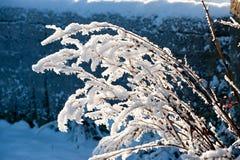 Schöne sonniger Tages- und Baumabdeckung mit Schnee Stockbilder