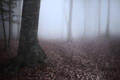 Schöne Spur im nebelhaften Wald Stockfotos