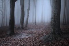 Schöne Spur im nebelhaften Wald Lizenzfreie Stockfotografie
