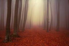 Schöne Spur im nebelhaften Wald Stockfoto