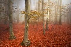 Schöne Spur im nebelhaften Wald Stockbild