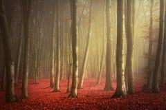 Schöne Spur im nebelhaften Wald Stockfotografie
