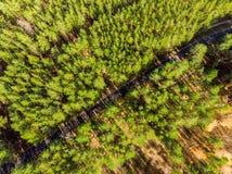 Schöne Straße durch immergrünen Kiefernwald am hellen sonnigen Tag Eco-Tourismus und Reisekonzept Luftbrummen virew stockfotografie