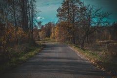 Schöne Straße im Wald lizenzfreie stockbilder