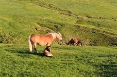 Schöne Stute mit Fohlen auf Weide Stockfoto