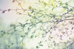 Schöne Suppengrünniederlassung mit Grün verlässt im Himmel stockbilder