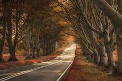 Schöne surreale Alternative farbige Waldlandschaft stockbilder