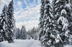 Schöne Szene des Winters stockfoto