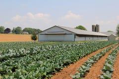 Schöne Szene mit dem neuen Getreideanbau im Ackerland Stockbild