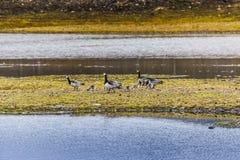 Schöne szenische Ansicht von Spitzbergen (Svalbard-Insel), Norwegen Lizenzfreies Stockbild