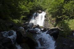 Schöne Tapete des Wasserfalls, strömen schnellen Milchfluß Felsiger Gebirgsfluss Abchasiens in der Waldwasserfallmolkerei Stockfoto