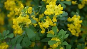 Schöne Tapete mit kleinen gelben Blumen Stockfotos