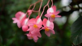 Schöne Tapete mit kleinen rosa Blumen Stockbild