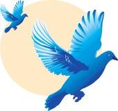 Schöne Taube zwei Stockfoto