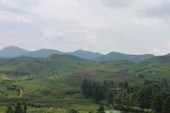 Schöne Teefelder in Puncak, Indonesien stockfotos