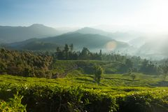 Schöne Teeplantage und -Berglandschaft bei Sonnenaufgang Lizenzfreies Stockbild